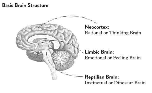 Image result for rational brain vs emotional brain