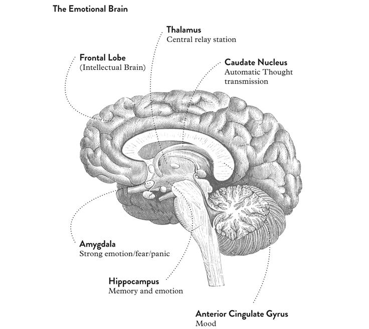 Brain structure, Head Heart and Brain