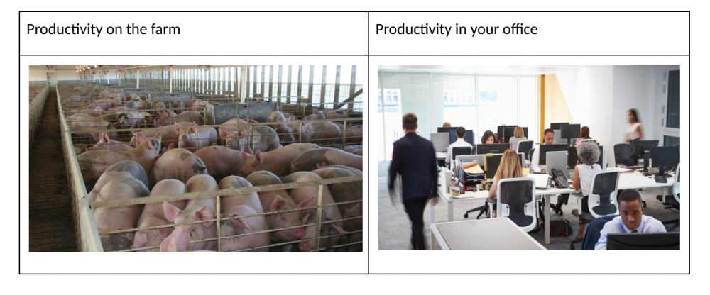 Productivity on the farm and in the office comparison