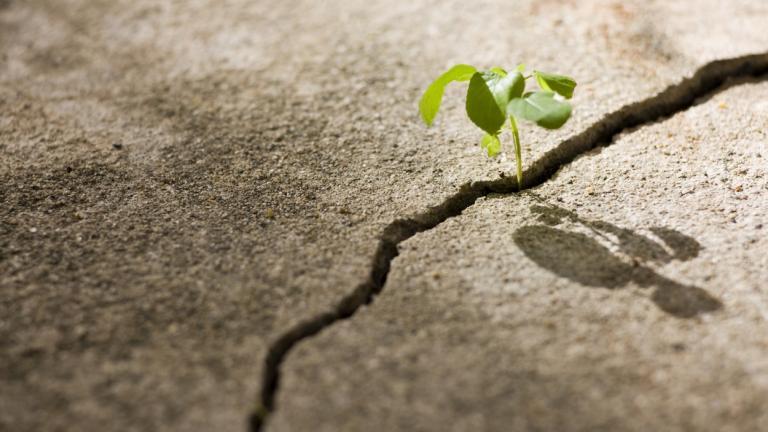 Seed growing in crack
