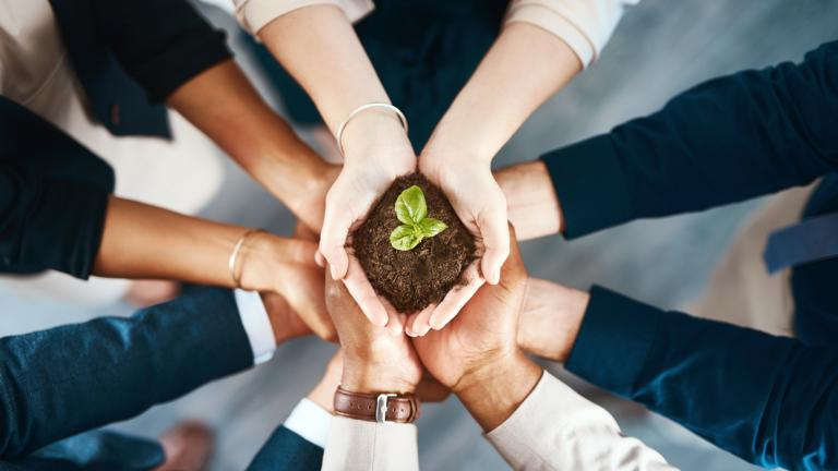 business people's hands holding a plant together