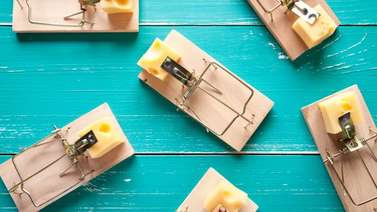 Mouse traps with cheese on turquoise table.