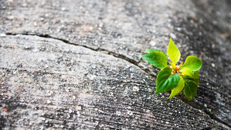 Young plant growing out of concrete
