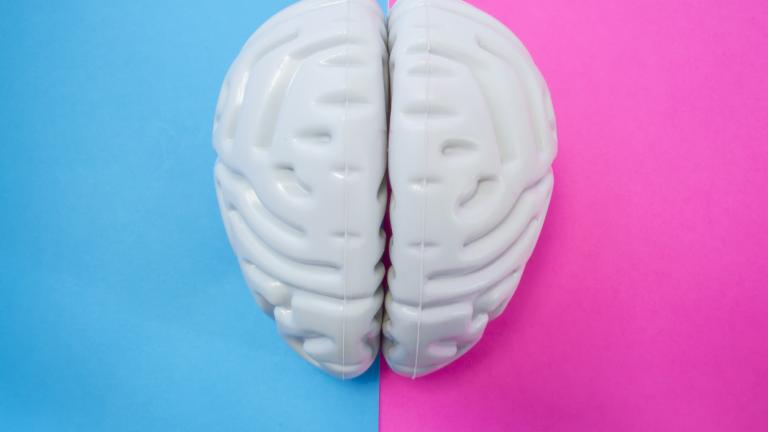 The figure of human brain separates half blue pink background. The concept of male and female brain