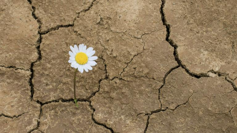 Daisy growing through crack