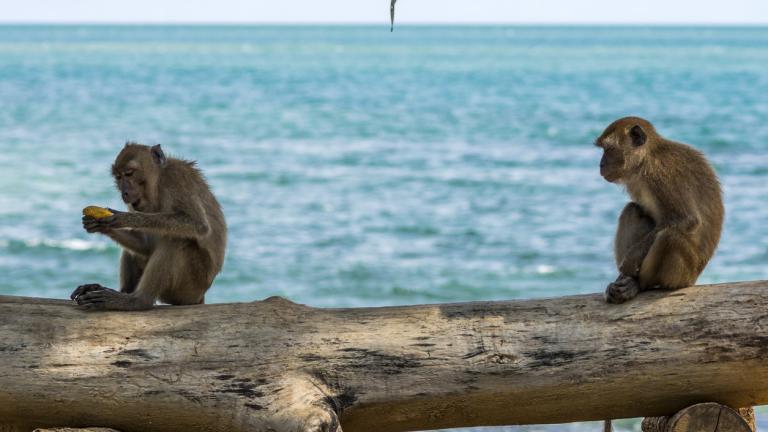Monkeys eating on stump of tree