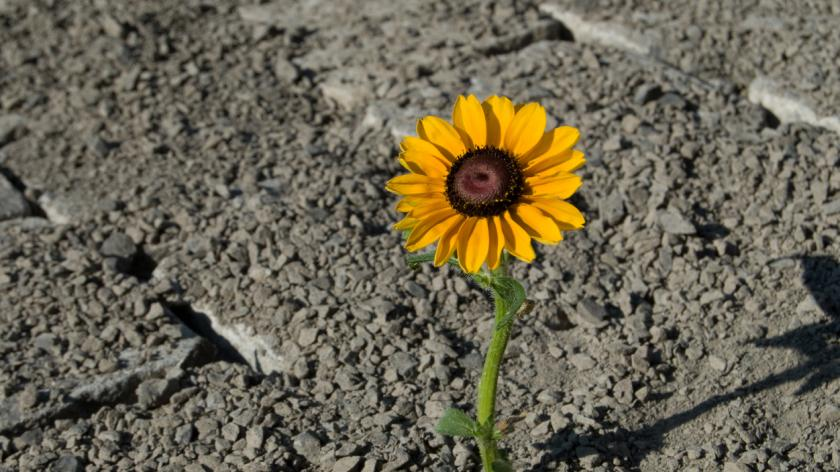 flower growing in concrete