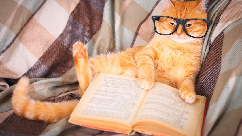 Ginger cat in glasses lying on sofa with book