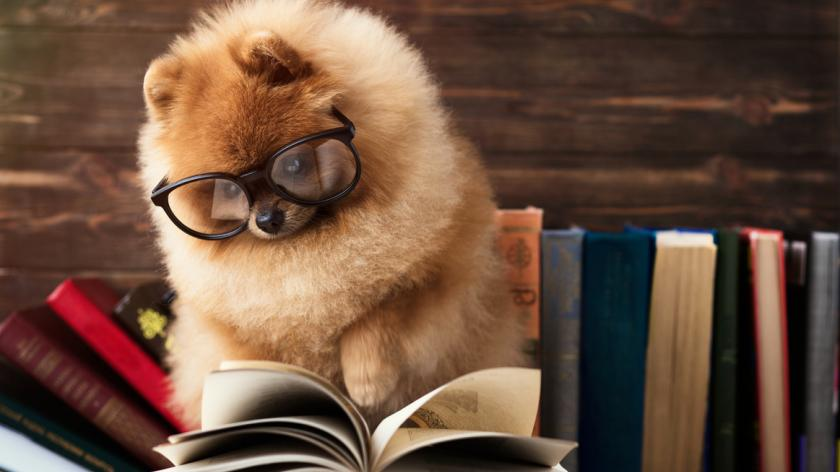 A dog with book